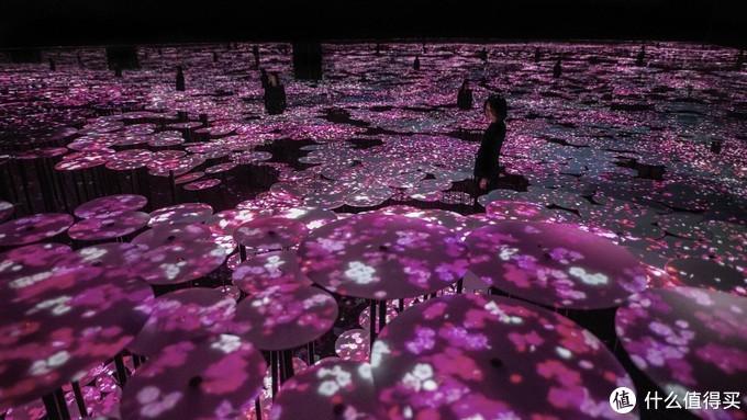 樱花©teamlab