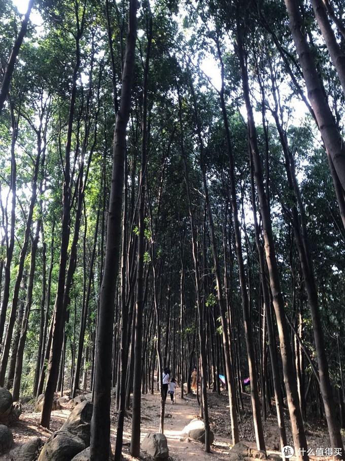 树林遮去阳光