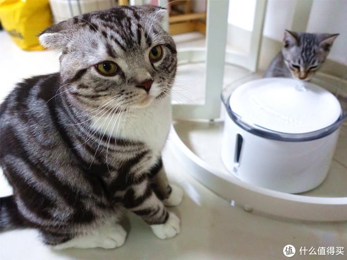 """""""喵,多喝水!""""——霍曼 猫咪/宠物智能饮水机"""