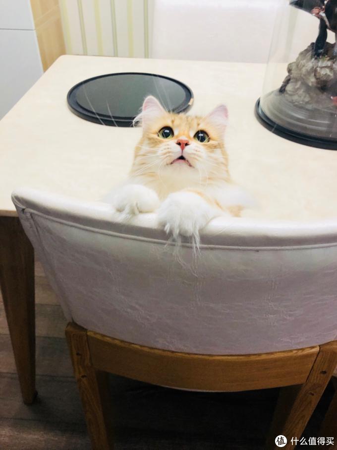 反向推荐!养猫以来不推荐购买的宠物用品避雷清单(个人主观)