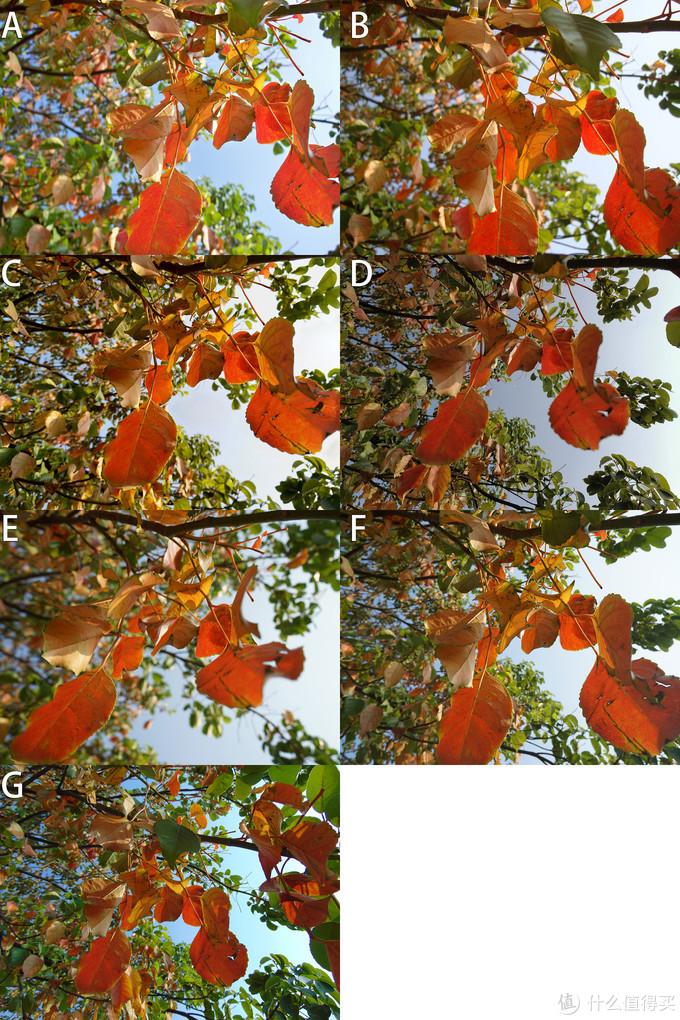 多款手机📱VS相机📷,一起小小比较,看那个色彩讨喜