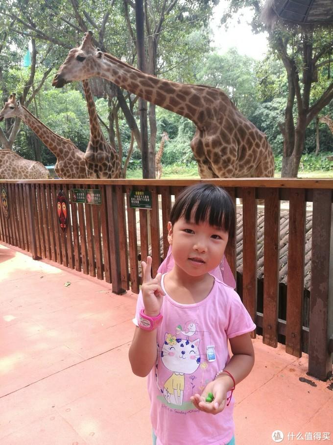 大长颈鹿很大力气的!