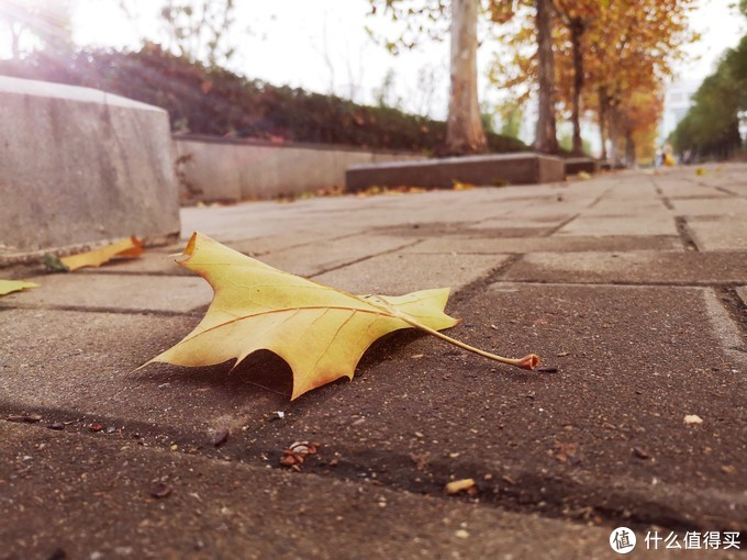 武汉已经悄悄步入了秋天,叶子都落了