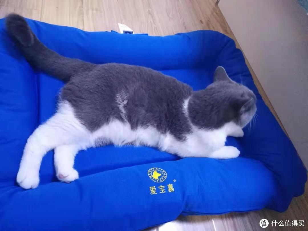 种草一款好用的猫咪垫子