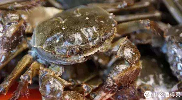 金秋吃蟹季,螃蟹全套攻略请收好,挑选储藏制作及食用全干货分享