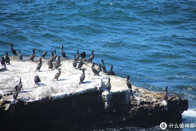 圣地亚哥一日游 退役的航母比马大