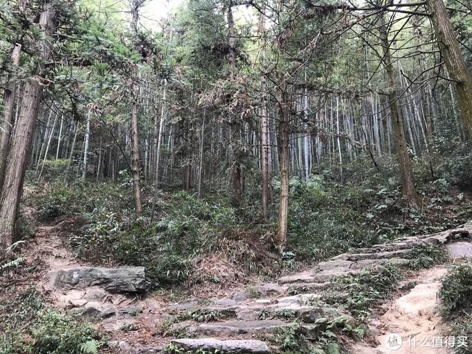 山路,沿着石阶走就可以