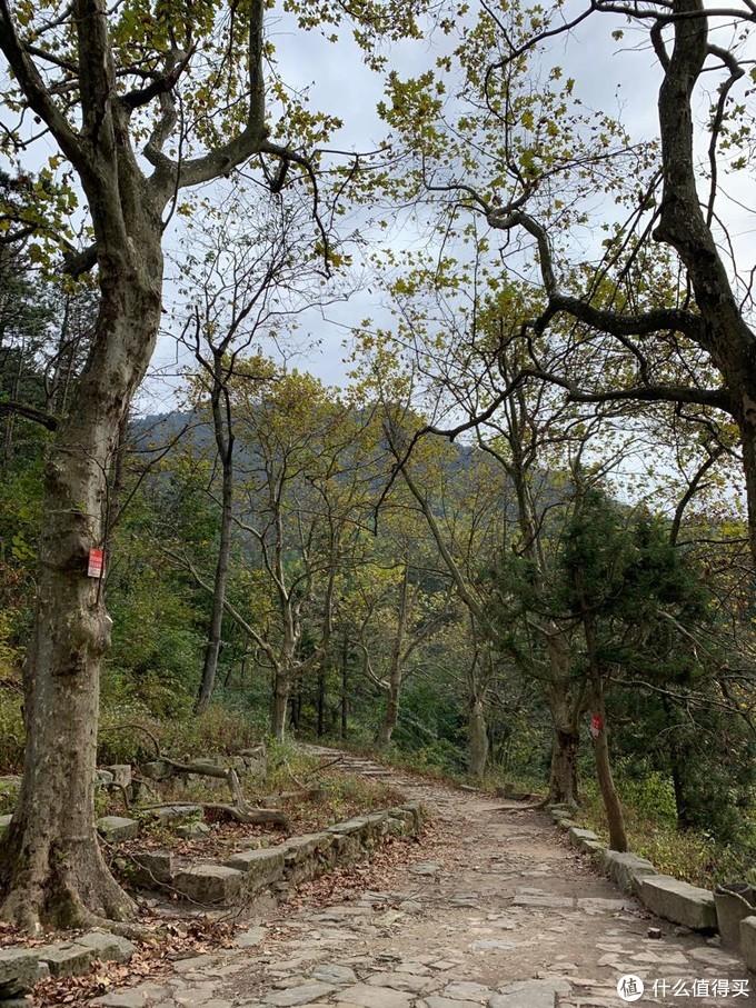 庐山印象:登庐山,好汉坡上另辟蹊径