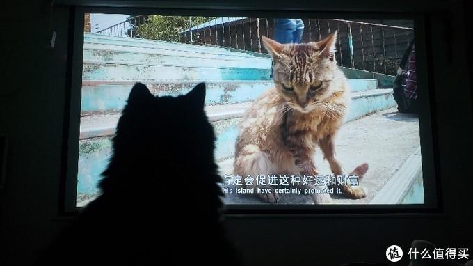 专注看猫片