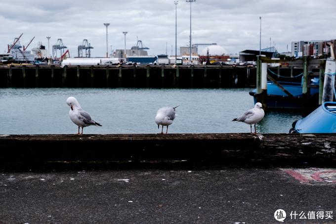 与摄影无关的感悟:世上没有俩个完全一样的鸽子,人也一样