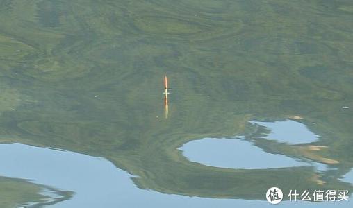 池塘毛桃树下,那连杆鲤鱼的快感……