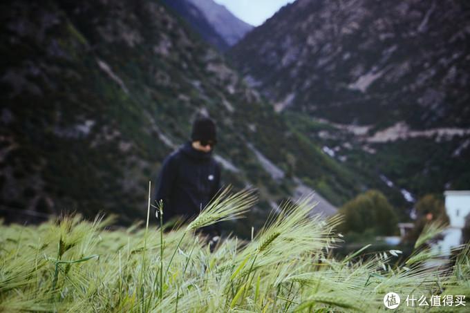 徒步起点拉岗村的青稞