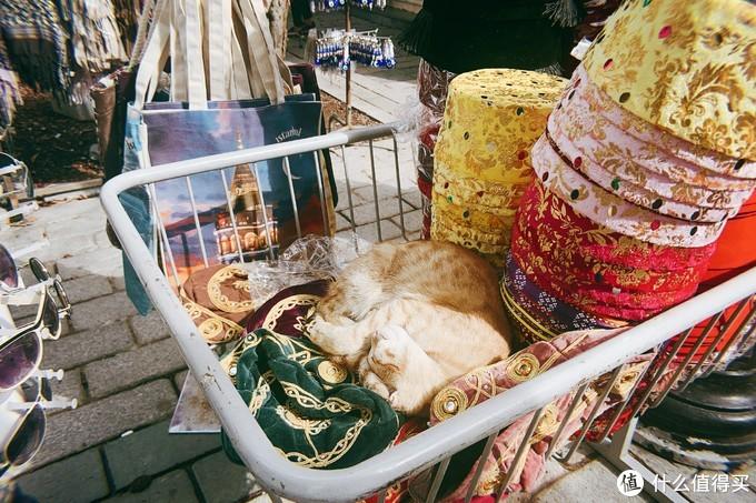 求求了,下辈子让我做一只伊斯坦布尔的猫叭
