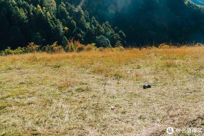 被太阳照耀的金黄的草地