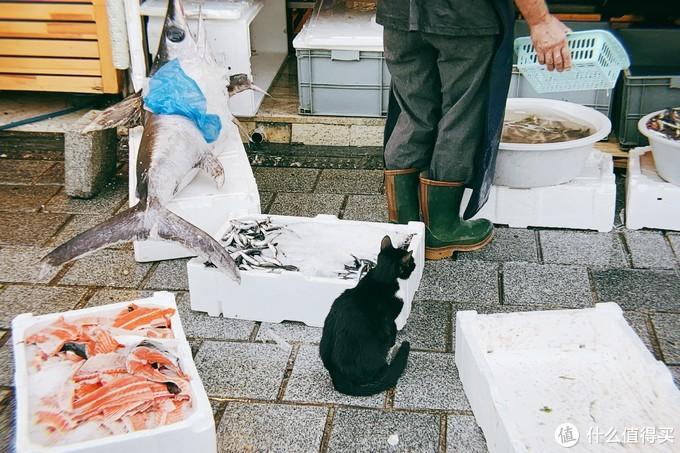 一只等待投喂的猫咪,可爱的很