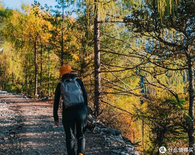 走在满是金黄的山里,树上都是大大小的松鼠窜来窜去,晒着暖和的夕阳附佛置身童话世界一般。