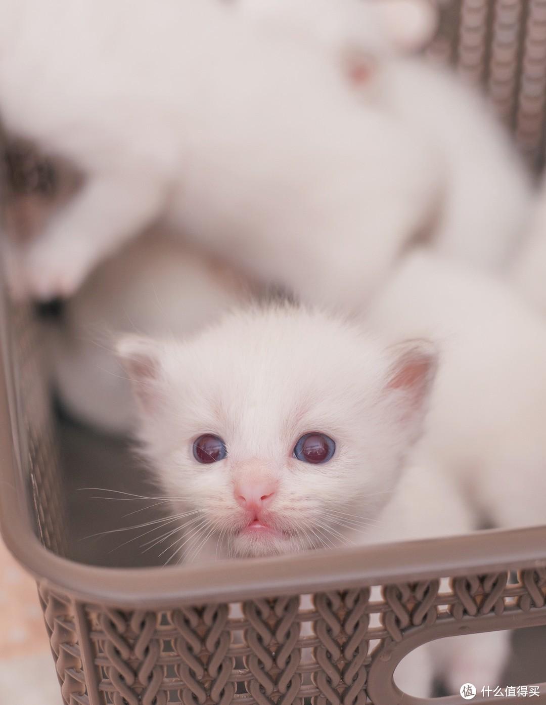 蚀人心骨欲罢不能的瘾——猫