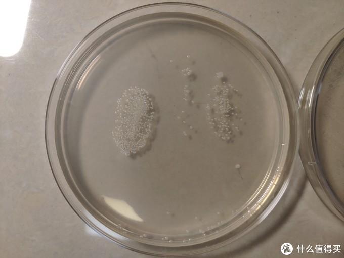 我用洗手液洗手后培养24小时的涂片