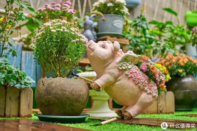 你家的花盆不够用了?有坛坛罐罐油漆桶也行啊!