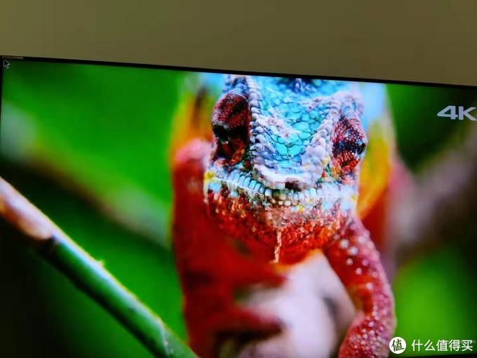 这个测试片的名字忘记了,视频中的变色龙用来测试电视机的色彩