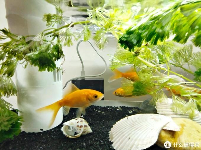 怎样低成本养些小鱼小虾,提高下生活情趣?