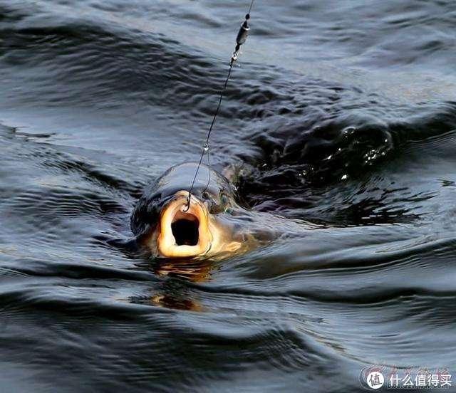 眼见黑坑边小伙摔断鱼杆,今日谈谈钓鱼人的心态