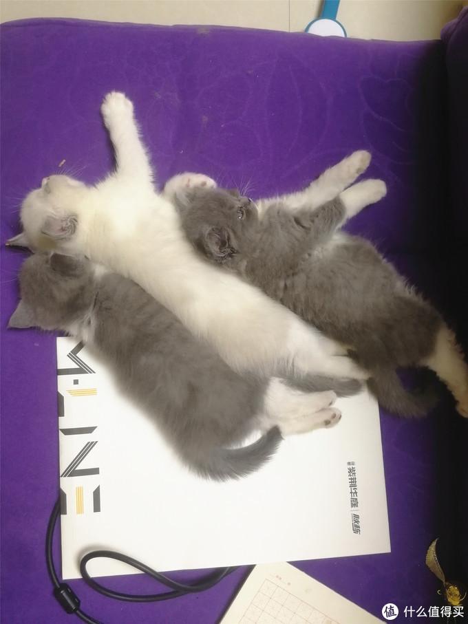 小奶猫是怎样变成胖大哥——肥猫养成记