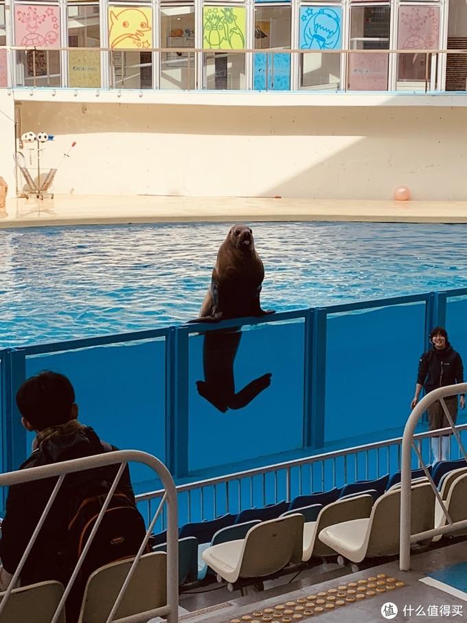 水族馆常驻明星之二,海狮