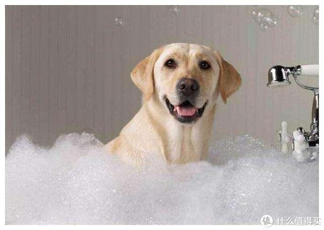 昨天刚洗的狗今天就臭了?少女教你给狗洗澡的正确姿势