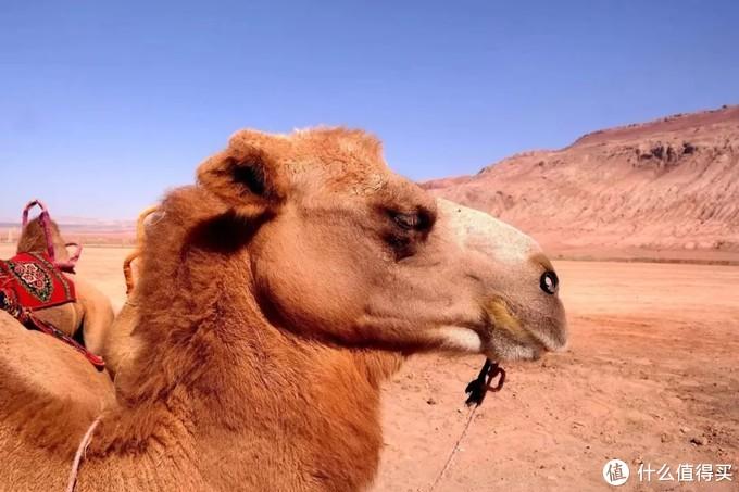 除了火焰山,吐鲁番还有那些值得转的地方?