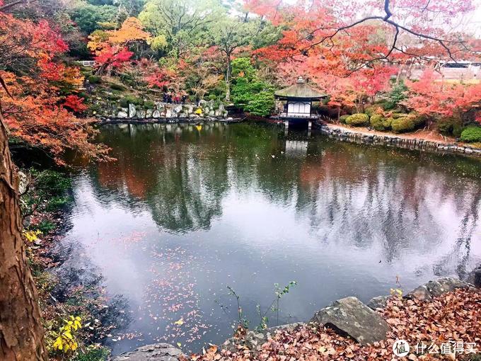 日本赏红叶的好去处--和歌山城