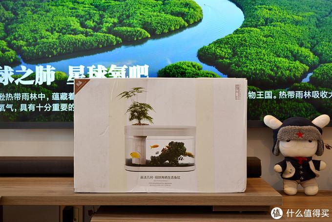 小米上架画法几何懒人鱼缸,鱼儿与绿植同生共存,傻瓜式零基础养殖