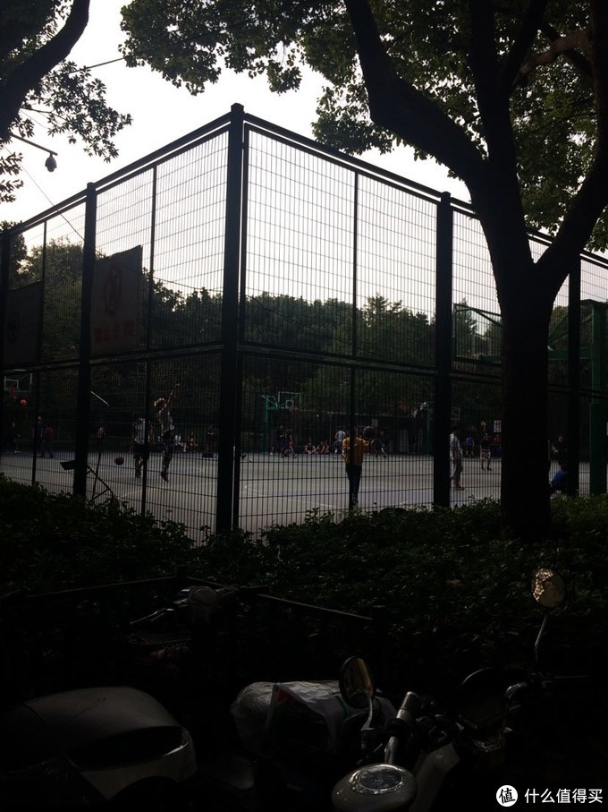 徐家汇公园(这座公园鸟语花香,就在徐家汇正中央)人与黑天鹅自然和谐相处
