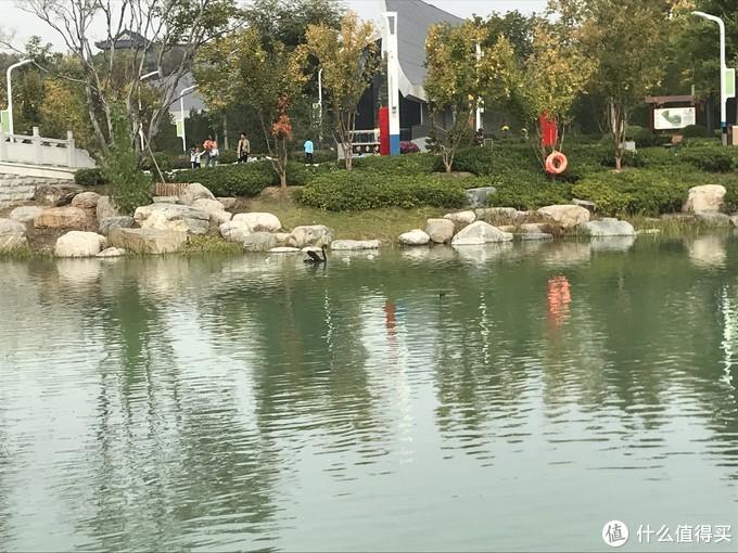第二次郑州园博园之行,秋高气爽,美景正好