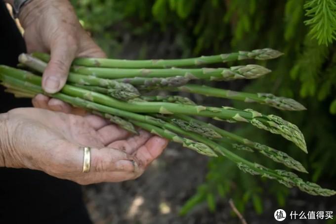 比西蓝花更低热量的芦笋,有什么营养价值?减肥怎么吃?