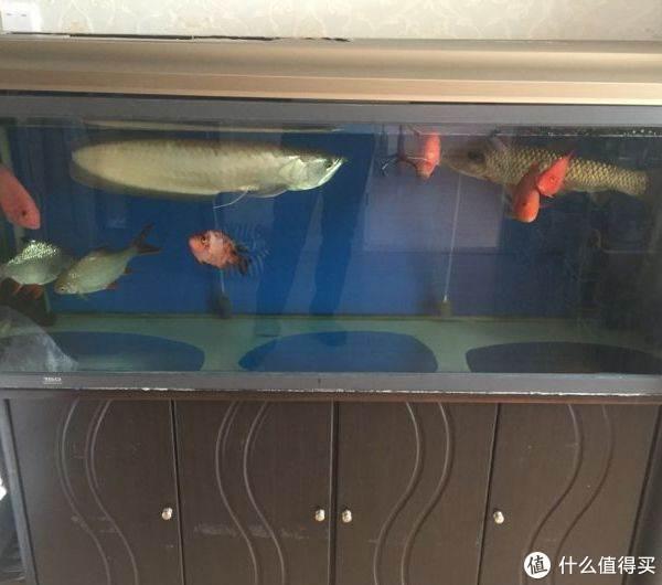 没错,就是那种坑爹成品缸,缸底放几块鹅卵石,再养一缸金鱼或锦鲤或鹦鹉鱼,就已经是很高大上的存在了!