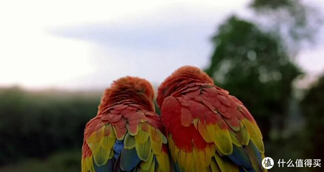清单在精不在长 盘点25部神级自然纪录片 史诗般制作带你领略世界浩瀚之美!