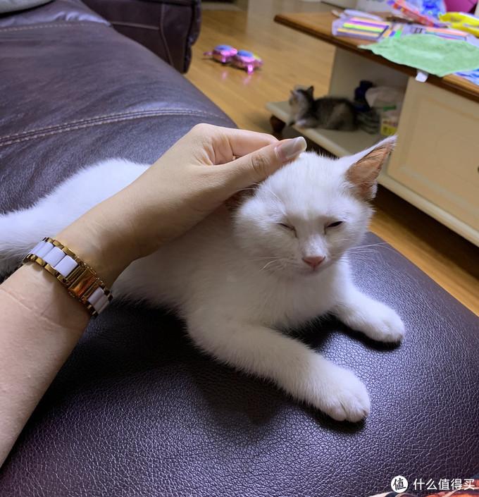 给猫主买的刮毛……哦不,痒痒挠-华元宠具(hoopet)宠物 开结梳