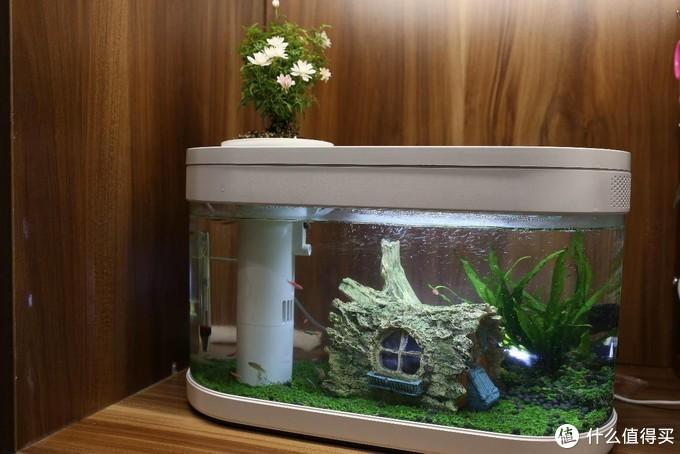 养鱼草缸一时爽,一直草缸一直爽,可能某天要翻缸