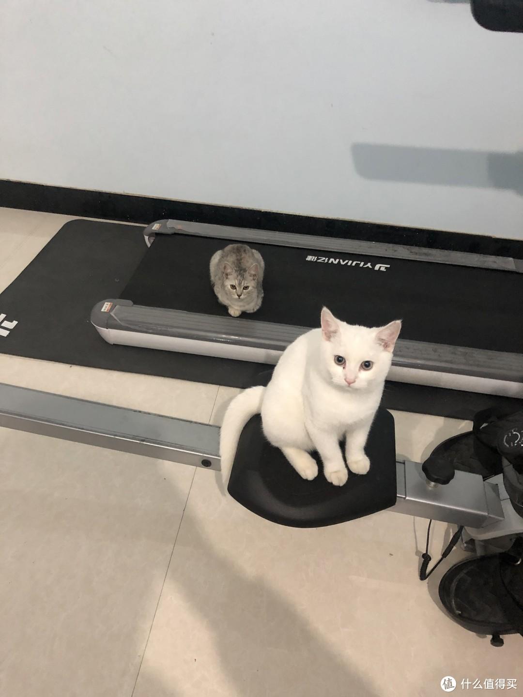 猫主立刻接受了的味道-麦富迪 金枪鱼通用幼猫粮10kg