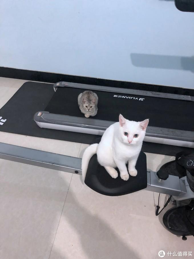 咱吸猫,猫吸啥?白菜价的-田田猫 猫薄荷 开箱实吸