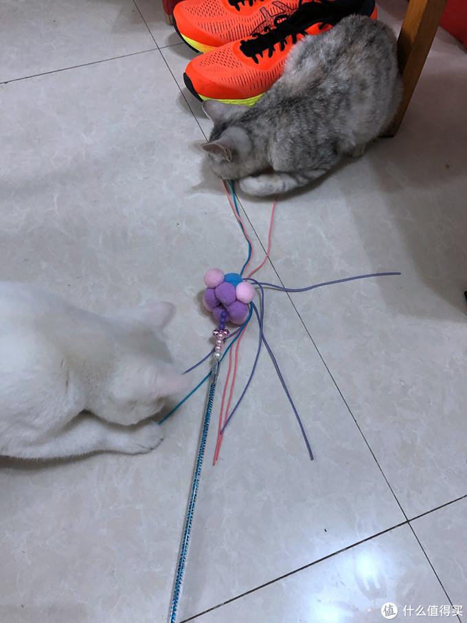 陪主子玩耍-派乐特 三色毛球逗猫棒