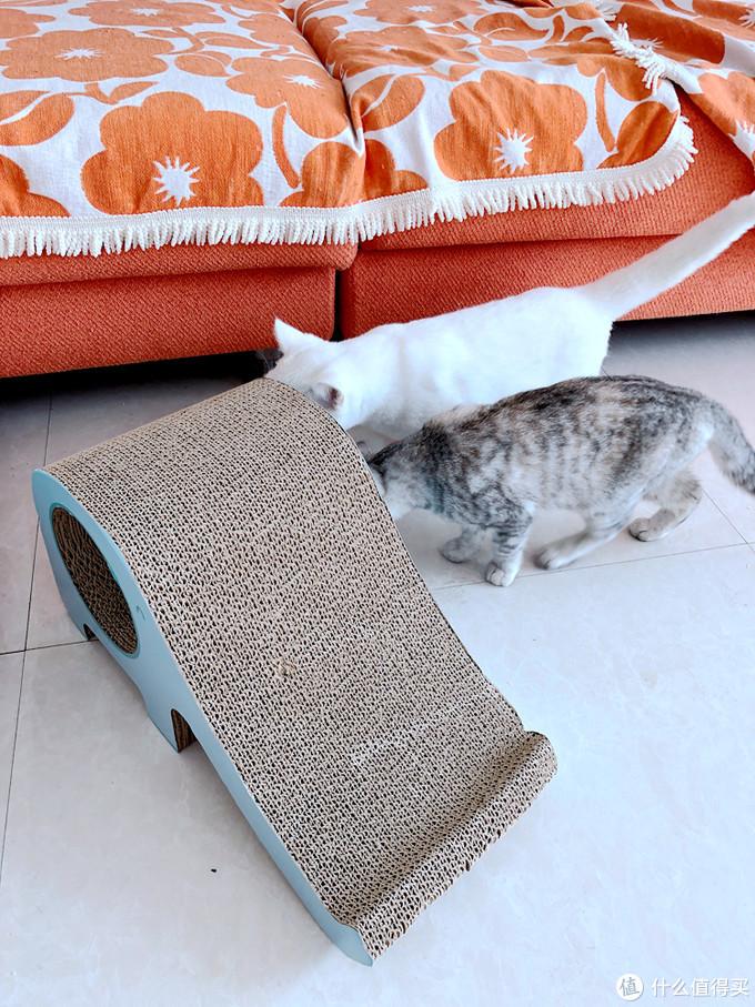 孝敬猫主的新玩具-华元宠具(hoopet)大象大猫抓板