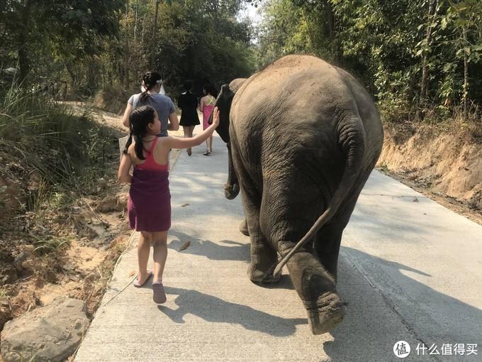大象大象大象!这才是带孩子和大象一起玩的最正攻略!