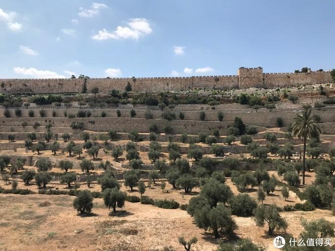 从橄榄山遥望耶路撒冷旧城城墙