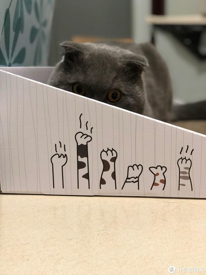 养猫日常之衣食住行