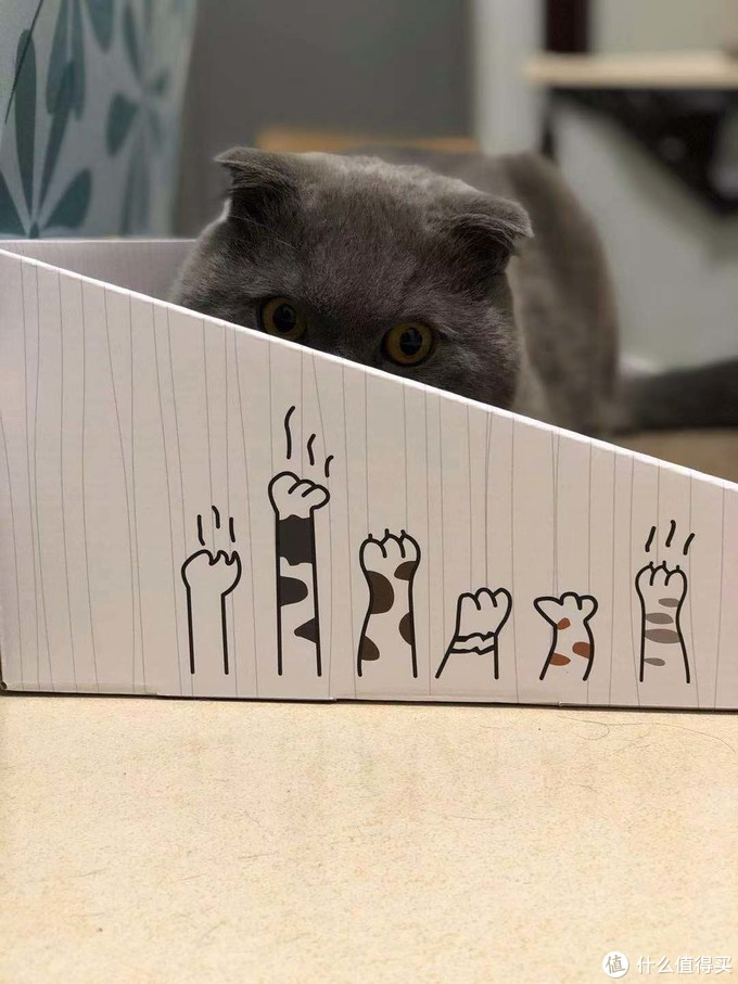养猫日常之买买买