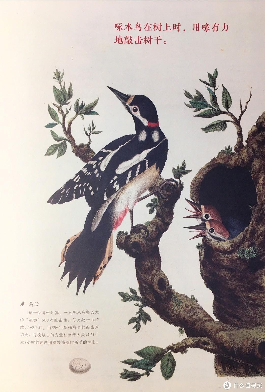 什么家庭啊?给孩子用荷兰国宝级藏书学习鸟类知识!