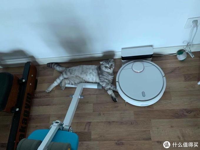 貓咪伴侶——扫地机器人