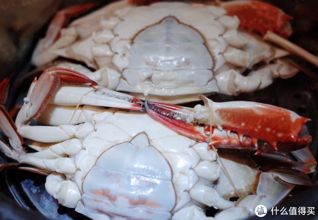飞蟹还是非常开心的,是海蟹里面非常棒的一种螃蟹。